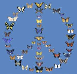 ButterflyPeace396Blue