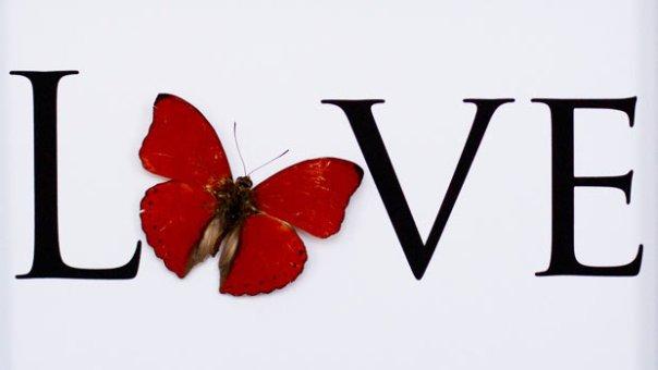 love-butterfly