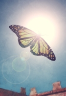 Butterfly_flying_to_the_sun_by_Valhallacarajo