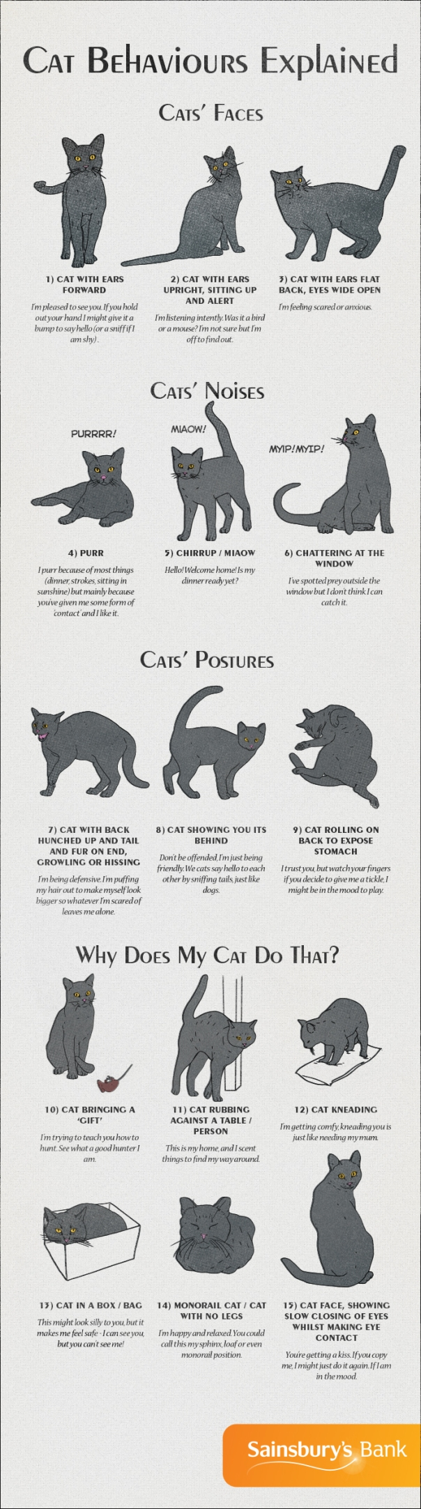 cat-behaviour-explained