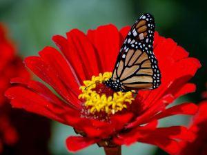 Butterflies-48