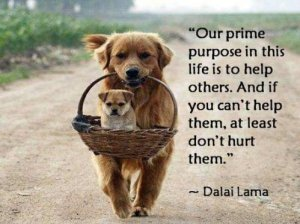 our-purpose-in-life