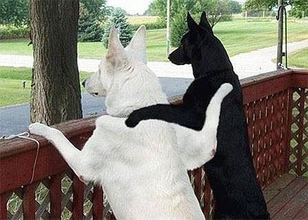 Black-Dog-White-Dog