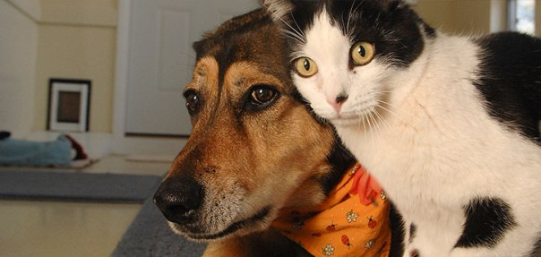 introducing-dogs-cats-resource
