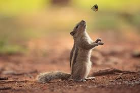 chipmunk and butterfly