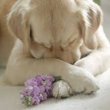 puppy praying